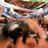 capoeira_latina_2010_25